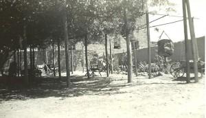 Rose Tree 1935